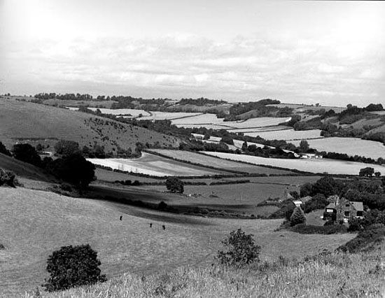 View from the Sydling to Cerne Abbas road. Photo: Robert Chisman